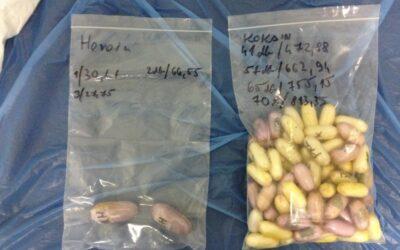 Kokain és heroin volt a gyomrában